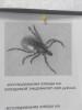 Ганзейские пространства в Пскове обработаны от клещей и комаров
