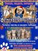 «Федерация кошек» будет гостить в Пскове месяц