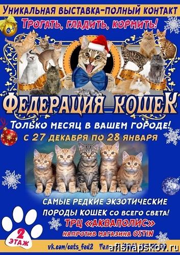 federatsia_koshek