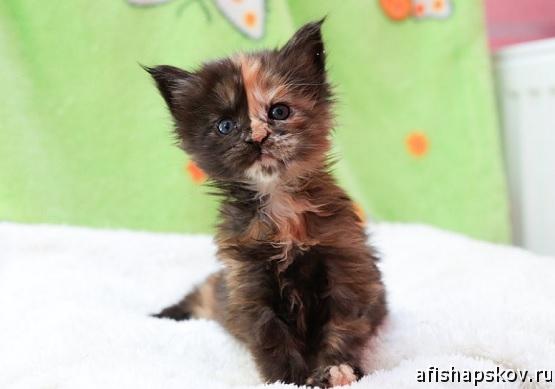 roxana_cats
