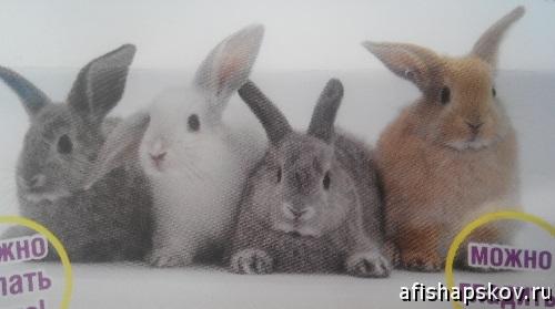 Выставка кроликов Псков