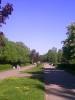 Реконструкция улицы Текстильной в Пскове: Дорога через городской парк?