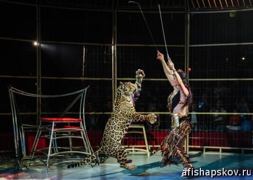 Цирк в пскове 2019