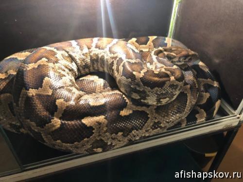 Выставка рептилий Псков