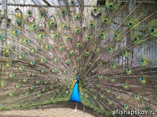 Птичий дворик Псков