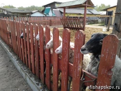 Птичий дворик Погорелка