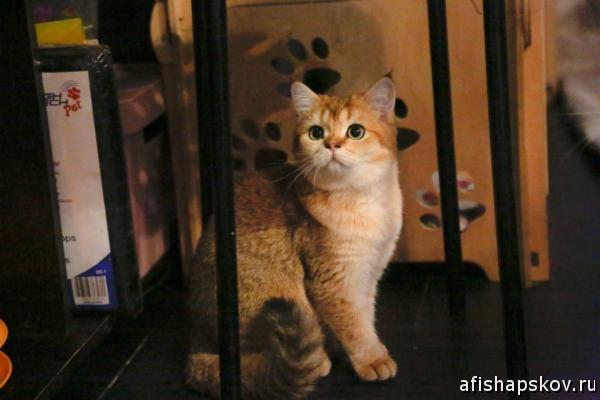 Выставка кошек Псков