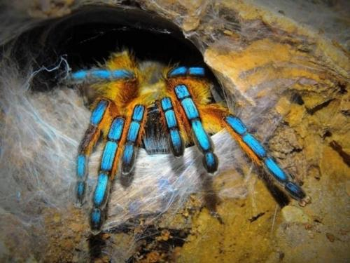 Выставка Мир пауков Псков